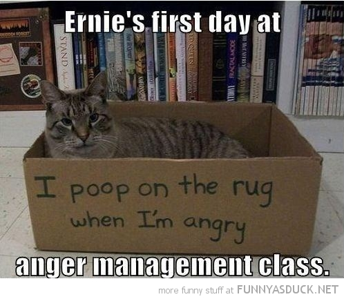 cat lolcat animal sitting box poop angry first day class funny pics pictures pic picture image photo images photos lol