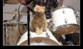 cat lolcat animal signing band sitting drum who let dogs out funny pics pictures pic picture image photo images photos lol