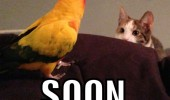 cat lolcat animal stalking staring bird soon funny pics pictures pic picture image photo images photos lol