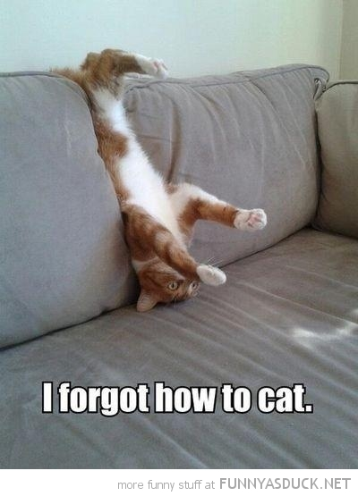 cat lolcat animal stuck upside down couch sofa forgot how funny pics pictures pic picture image photo images photos lol