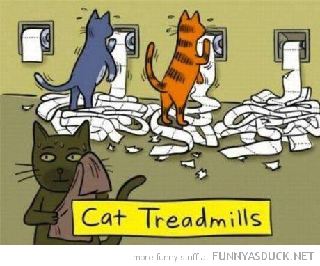cat treadmills comic toilet roll funny pics pictures pic picture image photo images photos lol