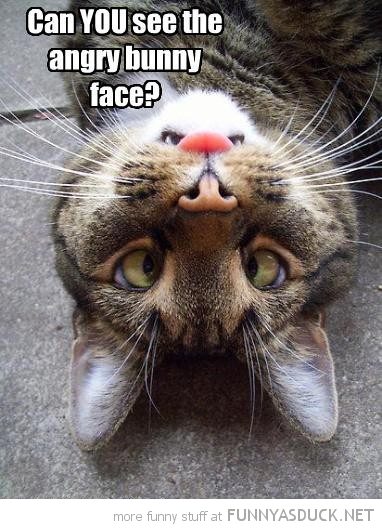 cat lolcat animal upside down angry bunny face funny pics pictures pic picture image photo images photos lol