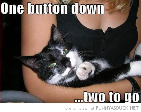 cat womans boobs tits lolcat animal one button down two go funny pics pictures pic picture image photo images photos lol