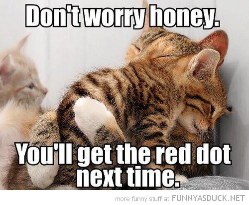 cats lolcats kittens animals hugging cuddling don't worry catch red dot next time funny pics pictures pic picture image photo images photos lol