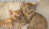 don't listen him drunk cat lolcat animal paw face funny pics pictures pic picture image photo images photos lol