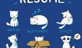 cats resume comic animals lolcats funny pics pictures pic picture image photo images photos lol