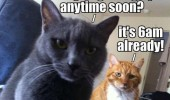 cats lolcats animals sitting bed are you getting up 6am funny pics pictures pic picture image photo images photos lol