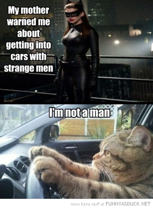 catwomen batman movie strange cars men cat man animal funny pics pictures pic picture image photo images photos lol