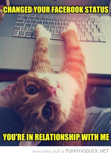 cat lolcat animal changed facebook status relationship me laptop computer funny pics pictures pic picture image photo images photos lol