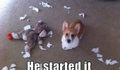 corgi dog animal ripped soft toy teddy he started it funny pics pictures pic picture image photo images photos lol