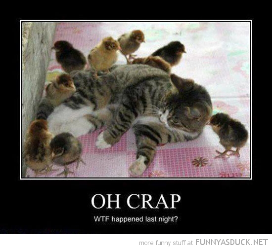 cat lolcat animal baby chicks oh crap what happened last night funny pics pictures pic picture image photo images photos lol