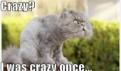 crazy mad cat lolcat animal was once funny pics pictures pic picture image photo images photos lol