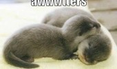cute baby otters hugging cuddling sleeping animals awwwters funny pics pictures pic picture image photo images photos lol