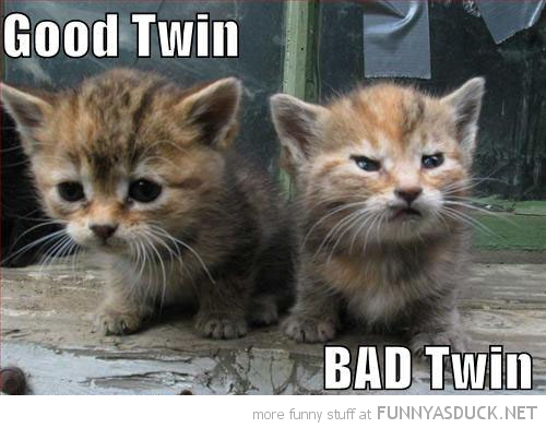 cute cats lolcats animals angry grumpy kitten good bad twin funny pics pictures pic picture image photo images photos lol