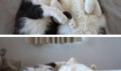 cute cats lolcats animals are you sleepy bed hugging cuddling bed funny pics pictures pic picture image photo images photos lol