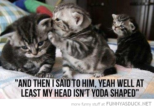cute cat kitten lolcat animal whisper ear yoda shaped head star wars funny pics pictures pic picture image photo images photos lol