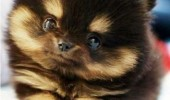 cute puppy dog animal resistence is futile funny pics pictures pic picture image photo images photos lol