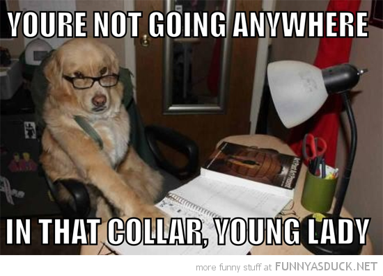 dad father dog glasses not going anywhere collar young lady funny pics pictures pic picture image photo images photos lol