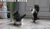 dancing cat kitten lolcat animal thriller impress friends funny pics pictures pic picture image photo images photos lol