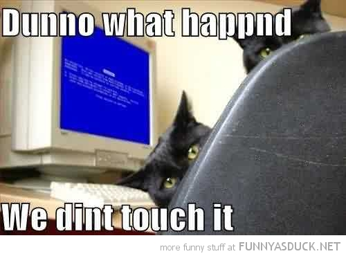 don't know happened didn't touch cats lolcats animals pc computer blue screen funny pics pictures pic picture image photo images photos lol