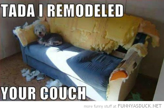 dog animal ripped wreaked couch tada i remodeled funny pics pictures pic picture image photo images photos lol