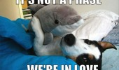 dog animal cuddling hugging dolphin soft toy not phase in love funny pics pictures pic picture image photo images photos lol