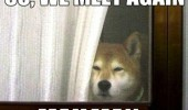 dog animal husky window door we meet again mailman funny pics pictures pic picture image photo images photos lol