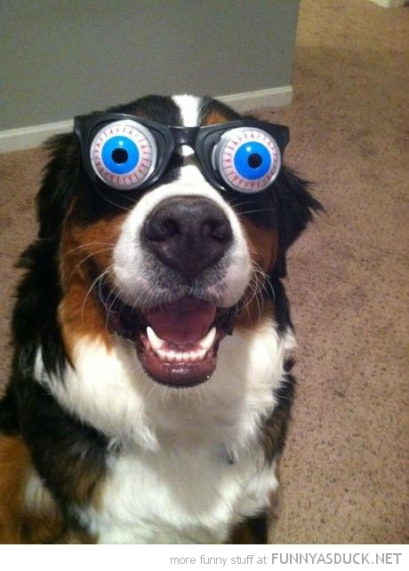 dog animal joke glasses crazy eyes funny pics pictures pic picture image photo images photos lol