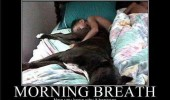 dog animal ass kids face morning breath funny pics pictures pic picture image photo images photos lol
