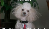 dog animal perm hair mom leave 80s behind funny pics pictures pic picture image photo images photos lol