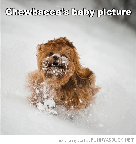 dog animal star wars running snow chewbaccas baby funny pics pictures pic picture image photo images photos lol