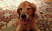 dog animal winking you look fetching funny pics pictures pic picture image photo images photos lol