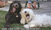 dogs animals laughing cat fell toilet dude stop funny pics pictures pic picture image photo images photos lol