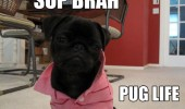 douchebag dog t-shirt sup brah pug life funny pics pictures pic picture image photo images photos lol