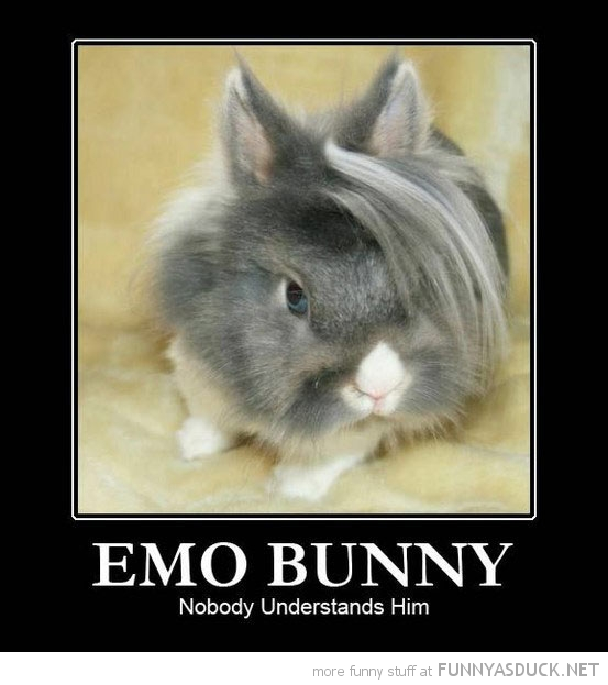 emo bunny rabbit animal nobody understands him funny pics pictures pic picture image photo images photos lol
