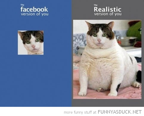 fat cat lolcat animal facebook profile funny pics pictures pic picture image photo images photos lol