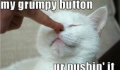 cat lolcat animal finger nose grumpy button pushing it funny pics pictures pic picture image photo images photos lol