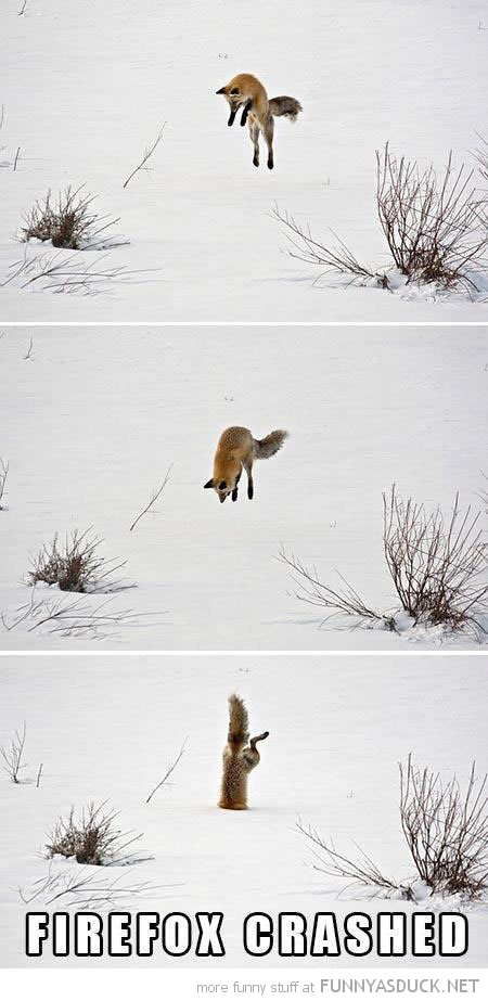 fox jumping stuck snow animal firefox has crashed funny pics pictures pic picture image photo images photos lol