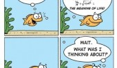 gold fish comic meaning life what was thinking about animal funny pics pictures pic picture image photo images photos lol