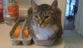 cat lolcat animal sitting egg box fits sits funny pics pictures pic picture image photo images photos lol