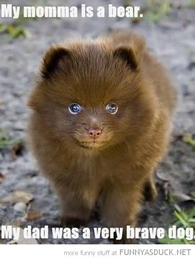funny-fluffy-puppy-dog-mom-bear-dad-brav