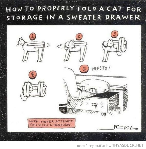 cat animal properly fold sweater drawer comic funny pics pictures pic picture image photo images photos lol