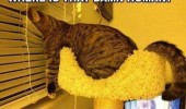 cat lolcat animal blinds windows where human food bowl empty funny pics pictures pic picture image photo images photos lol