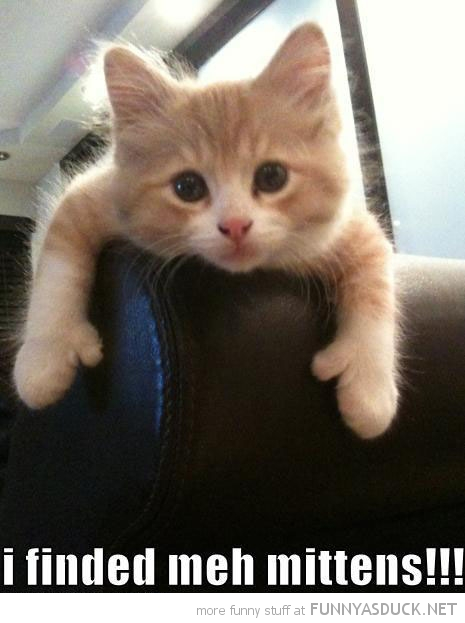 cat kitten lolcat animal found my mittens couch funny pics pictures pic picture image photo images photos lol
