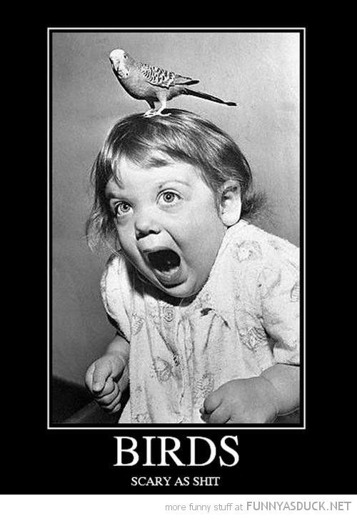 girl scared bird head crying scary as shit funny pics pictures pic picture image photo images photos lol