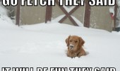 dog animal stuck snow go fetch the said fun funny pics pictures pic picture image photo images photos lol