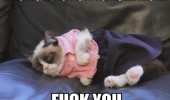 grumpy angry cat lolcat animal feel pretty fuck you funny pics pictures pic picture image photo images photos lol