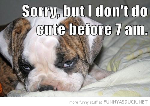 grumpy angry dog animal puppy don't do cute morning 7am funny pics pictures pic picture image photo images photos lol
