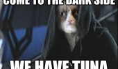 grumpy angry cat come dark side tuna star wars jedi sith movie funny pics pictures pic picture image photo images photos lol