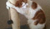 happy cat lolcat animal hugging scratching post cuddling thank you funny pics pictures pic picture image photo images photos lol